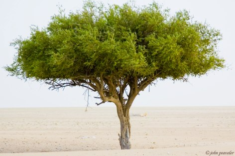 The only tree for miles around, and almost the only vegetation at all. Humans are causing desertification at an alarming rate.